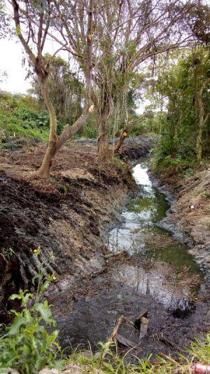 Vala - Mata Atlântica (Depois da limpeza)